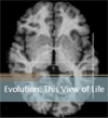 Evolution - This View of Life Interview